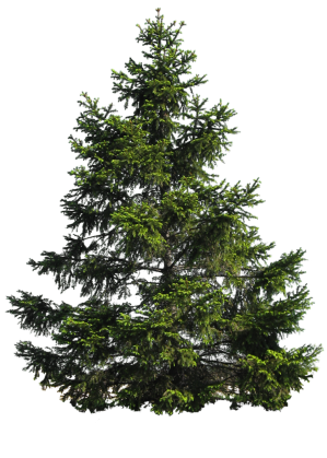 pine_tree_png_by_paradise234-d5fvhyc